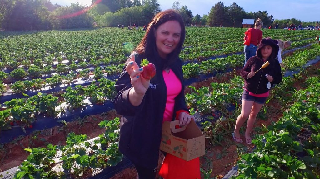 Picking Strawberrys in Springs Farms Fort Mill