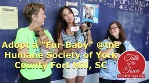 How To Help The Humane Society York County