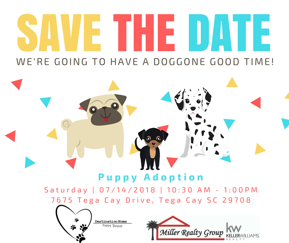 Don't Forget! July 14th From 10:30-1:00 We will have PUPPIES!